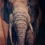 Africal Elephant realistic tattoo