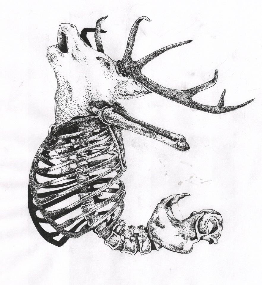 Deer Ribs Skeleton dotwork