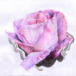Dew Drop on rose drawing tattoo