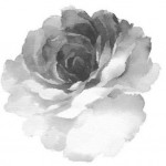 Graphic aquarelle rose drawing tattoo