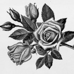 Graphic rose drawing tattoo