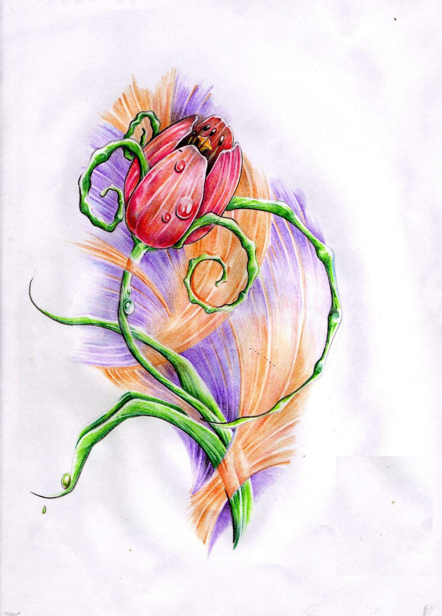 Illustration rose drawing tattoo with dew drop
