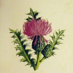 Realistic thistle bud tattoo