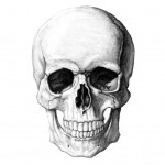 Realy Only Skull