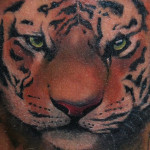 Realistic tiger tattoo by Szilard