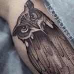 Curious Owl on Leg