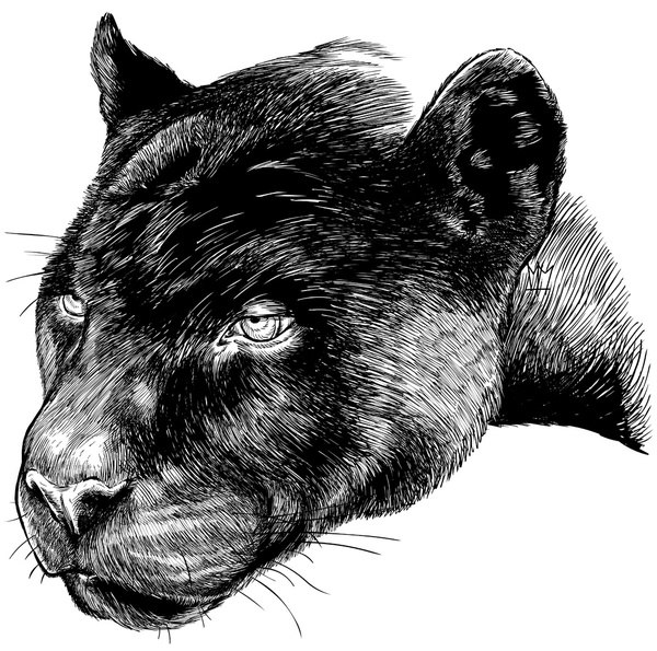 Graphic Panther tattoo idea