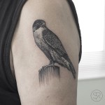 Realistic Falcon tattoo on Shoulder