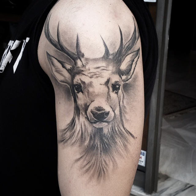 Soft Grey Deer