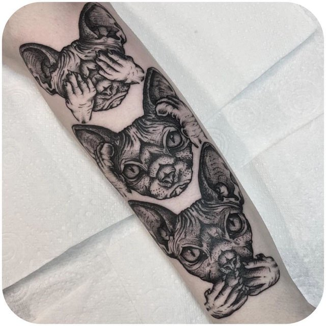 Sphynx cats heads tattoos on arm