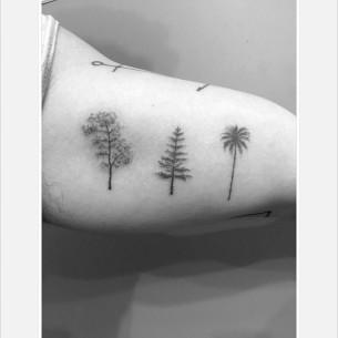 Oak Pine Palm Tree Tattoos