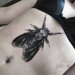 moth tattoo on stomach