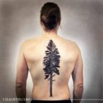 back tattoo pine tree