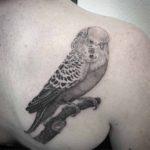 Tattoo Parrot