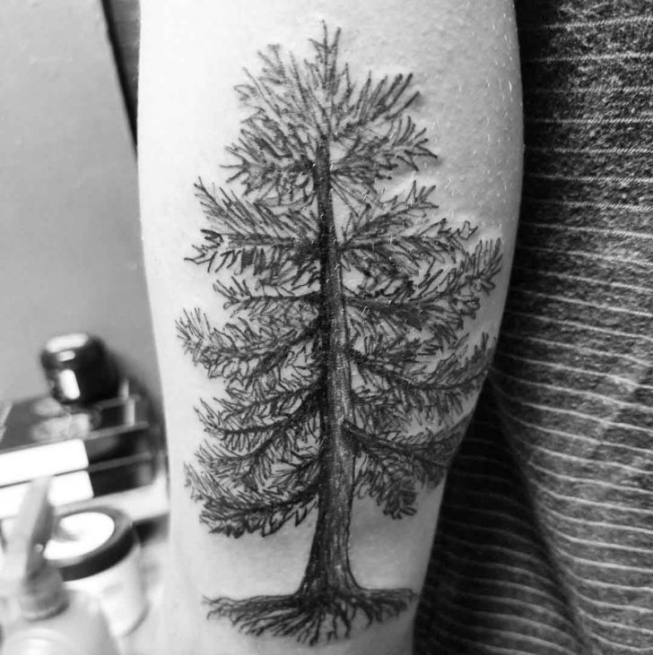 Sketchy Pine Tree Tattoo