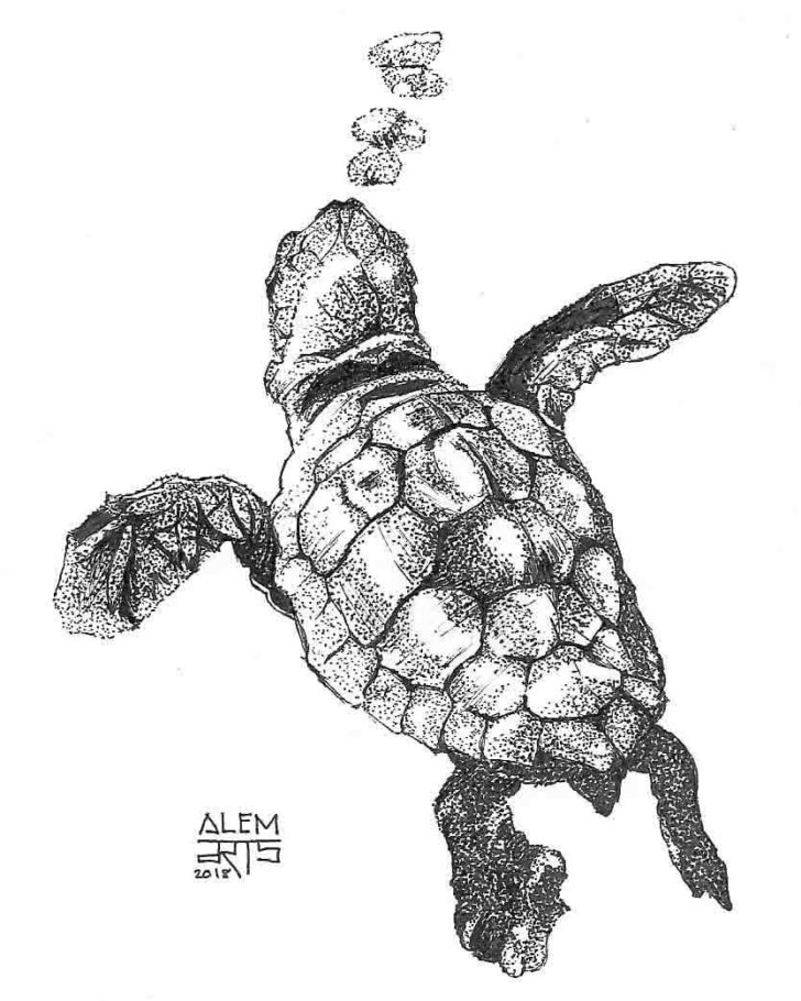 Dotwork Sea Turtle Tattoo Design